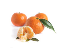 Зрелый tangerine стоковые изображения