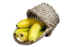 4 зрелых банана разливая от переворачиванной плетеной корзины Стоковое фото RF