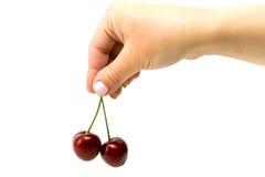 2 зрелых вишни в изолированной руке Стоковые Изображения RF