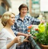 2 зрелых женщины выпивая кофе Стоковое Изображение RF