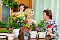 2 зрелых женщины и девушка позаботить о заводы Стоковые Изображения RF