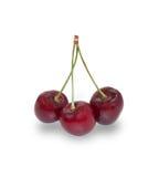 3 зрелых изолированной вишни ягод, Стоковое Фото