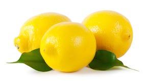 3 зрелых лимона с листьями Стоковая Фотография