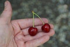 2 зрелых красных вишни на открытой ладони Стоковое Фото