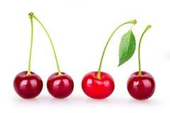4 зрелых красных вишни Стоковая Фотография