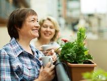 2 зрелых домохозяйки наслаждаясь чаем на террасе Стоковые Изображения