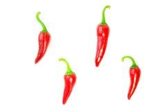 4 зрелых перца красных чилей на белизне Стоковое Изображение RF