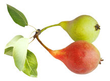 2 зрелых плодоовощ груши изолированного на белизне Стоковая Фотография RF