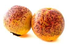 2 зрелых плодоовощ guava Стоковые Изображения