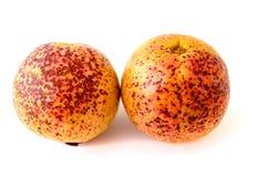 2 зрелых плодоовощ guava Стоковая Фотография