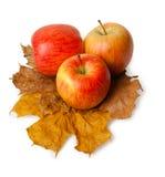 3 зрелых свежих красных яблока Стоковые Изображения RF