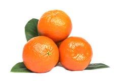 3 зрелых сочных оранжевых tangerines с листьями Стоковая Фотография