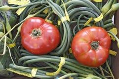 2 зрелых томата на зеленых цветах Стоковые Изображения RF