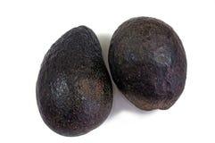 2 зрелых черных авокадоа Стоковое Изображение RF