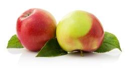 2 зрелых яблока на белой предпосылке Стоковое Изображение