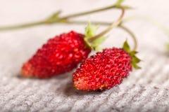 2 зрелых ягоды конца одичалой клубники вверх Стоковые Изображения RF