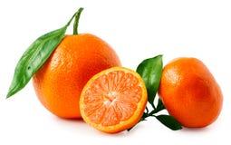 2 зрелых tangerines изолированного на белой предпосылке Стоковое Изображение