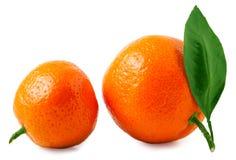 2 зрелых tangerines изолированного на белой предпосылке Стоковое фото RF