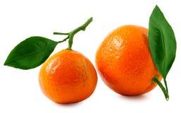 2 зрелых tangerines изолированного на белой предпосылке Стоковое Изображение RF