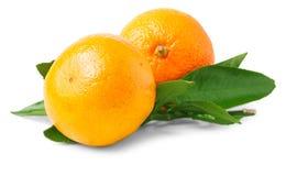 2 зрелых tangerines с листьями Стоковые Фото