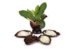 Зубная паста от естественных трав Таиланда сырья имеет медицину свойства Стоковые Изображения