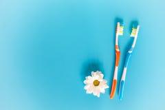 2 зубные щетки и цветка стоцвета на свете - голубой предпосылке Стоковое Изображение RF