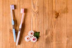 2 зубные щетки и цветка стоцвета на светлой предпосылке Концепция естественных косметик для здоровья Вы я Взгляд от abov Стоковое Изображение RF
