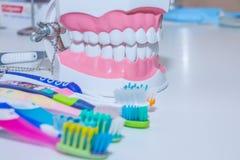 Зубоврачебная модель с зубной щеткой забеливать Забота зуба концепция зубов здоровая различные типы зубных щеток красивейшая усме Стоковое Изображение RF