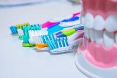 Зубоврачебная модель с зубной щеткой забеливать Забота зуба концепция зубов здоровая различные типы зубных щеток красивейшая усме Стоковая Фотография