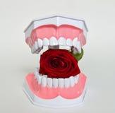 Зубоврачебная челюсть и розовый цветок, изображение торжества дня дантиста Стоковое фото RF
