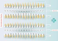 Зубоврачебное и периодонтальное составление схемы Стоковые Изображения RF