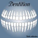 Зубоврачебные показатели 3D Стоковое фото RF