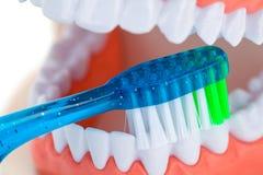 Зубоврачебный конец зубной щетки вверх Стоковое Изображение RF
