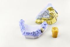 2 зубоврачебных прессформы и модель зуба Стоковые Фотографии RF