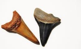 зубы акулы Стоковое фото RF