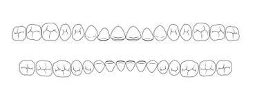 Зубы борозд иллюстрация вектора