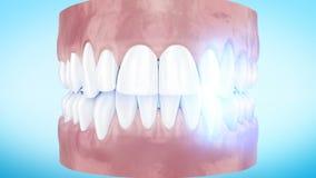 Зубы забеливая анимацию 3d процедуры близкую поднимающую вверх полное HD 1920x1080 сток-видео