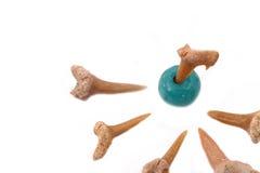 Зубы и бирюза акулы на белой предпосылке Стоковое Фото