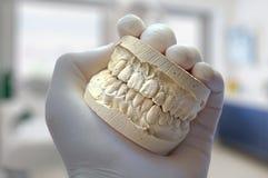 Зубы модели выставки руки дантиста Стоковая Фотография
