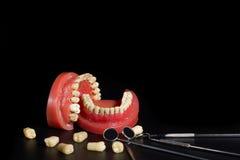 Зубы модель и оборудование дантиста Стоковые Фото