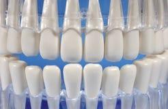 зубы Стоковые Изображения