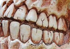 зубы halloween Стоковые Изображения