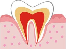 зуб внутренней структуры Стоковая Фотография