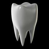 зуб изолированный чернотой молярный иллюстрация вектора