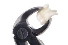 зуб Стоковые Фотографии RF