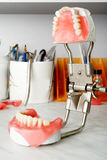 зуб Стоковые Изображения RF
