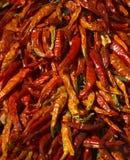 зябкий высушенный красный цвет горячего перца Стоковое Фото