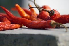 зябкий красный цвет Стоковые Фото