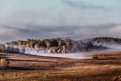Злаковики тумана Внутренней Монголии Стоковая Фотография