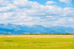 Злаковик лета в заповеднике Barguzin, Сибире Стоковая Фотография